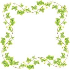 裁剪路径绿色的常春藤孤立在白色背景