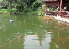 黄果树瀑布-观鱼池图片