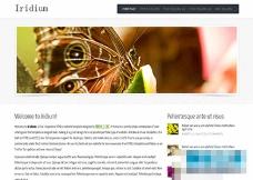 大图婚纱摄影行业网站html5模板