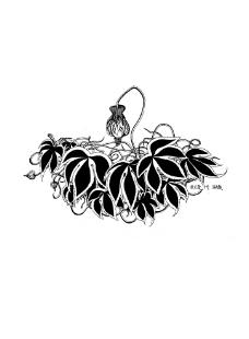 花和叶子黑白装饰画图片