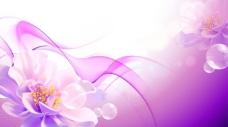 花背景素材矢量图