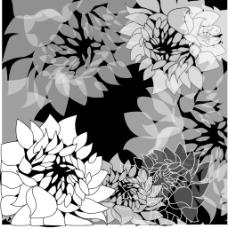 黑色和白色花的背景—