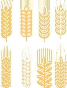 麦穗矢量素材3