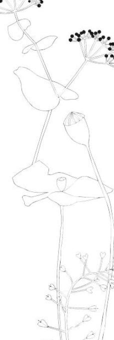 花卉简笔画边角剪纸步骤图