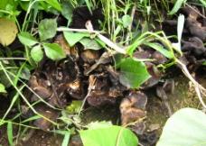 晒焦的蘑菇图片