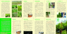 木苗手册图片