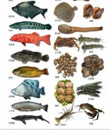 海鲜鱼素材图片