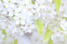 花白色背景