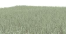 绿色草地背景纹理