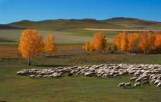 西北大草原图片