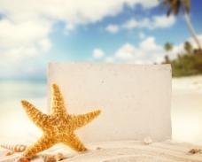 海星背景图片
