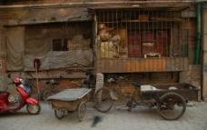 三轮车图片