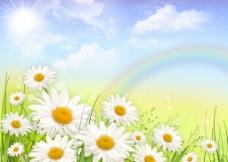 晴空下绽放的菊花图片