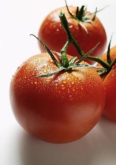 新鲜西红柿图片