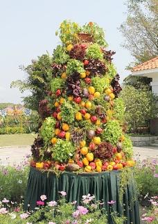 蔬菜汇图片