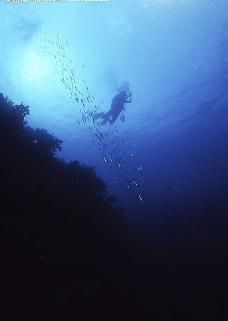 海底游泳图片