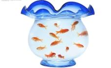 金鱼在浴缸里游泳图片