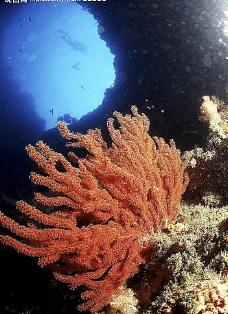 珊蝴礁石图片
