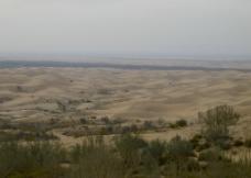 沙漠中的绿洲图片