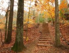 秋天里山间小道图片