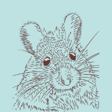 印花矢量图 卡通 动物 松鼠 童装 免费素材