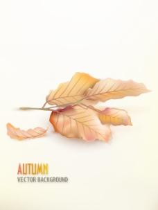 有很多的树叶矢量秋天背景