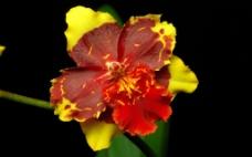 位图 写实花卉 植物 花朵 野花 免费素材
