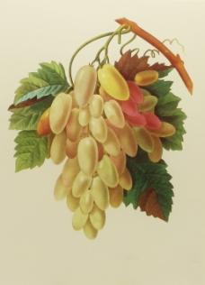 位图 植物图案 写意花卉 花朵 免费素材