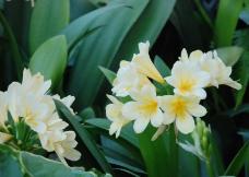 位图 植物 花朵 写实花卉 牵牛花 免费素材