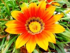 位图 写意花卉 植物 花朵 免费素材