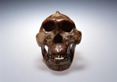 人头解剖模型