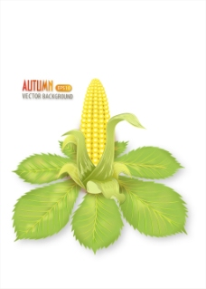 玉米矢量秋天背景