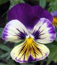 位图 植物摄影 写实花卉 花朵 数码照片 免费素材