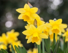 位图 ?#21442;?#25668;影 写实花卉 花朵 数码照片 免费素材