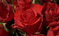 位图 植物摄影 写实花卉 花朵 免费素材
