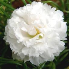 位图 植物摄影 写实花卉 花朵 牡丹 免费素材