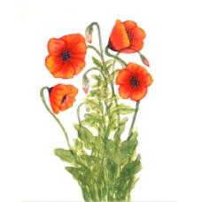 位图 植物 写意花卉 花朵 牵牛花 免费素材