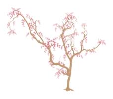 葡萄树的背景