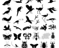 百款鸟类昆虫矢量元素剪影