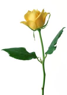 位图 写实花卉 植物摄影 花卉 花朵 免费素材