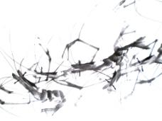 位图 国画 齐白石 虾 水墨 免费素材