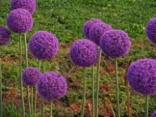 位图 植物摄影 花卉 花朵 免费素材