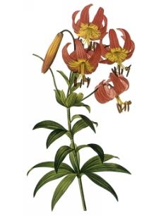 位图 写实花卉 艺术效果 水彩 花卉 免费素材