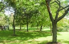 绿荫 树木图片