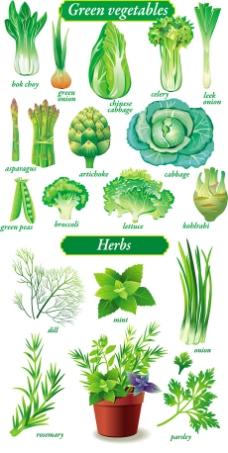 精致绿色蔬菜矢量素材