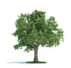 树木  植物  景观植物图片