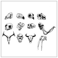 动物骷髅头矢量素材