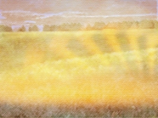 梦幻黄色草地背景