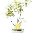 Pot盆栽037