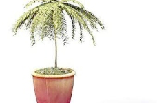 Pot盆栽033